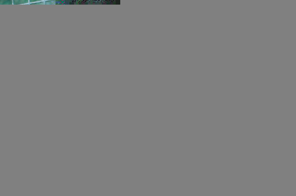 double doodle puppy, north american retriever puppy